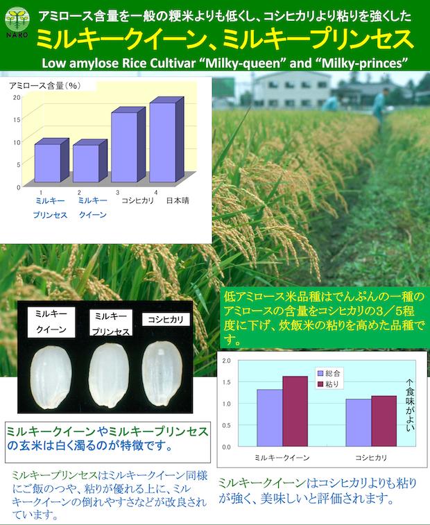20191117_rice.jpg