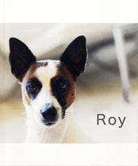 Roy%E5%86%99%E7%9C%9F%E9%9B%86001.jpg