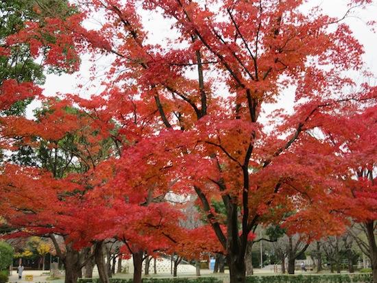 banshu_5138.JPG