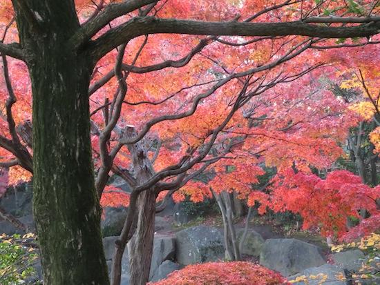 banshu_5171.JPG