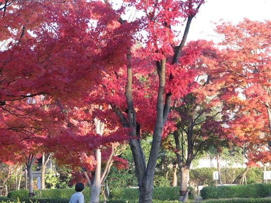 banshu_5183.JPG