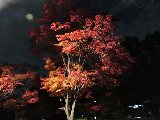 banshu_5269.JPG