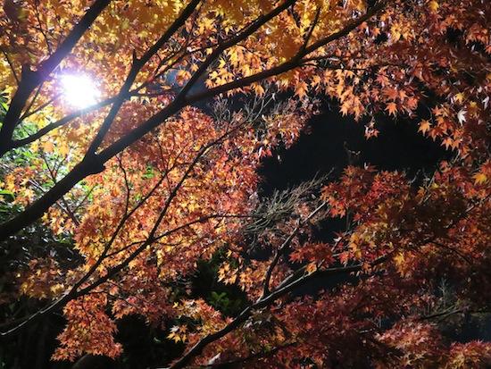 banshu_5292.JPG