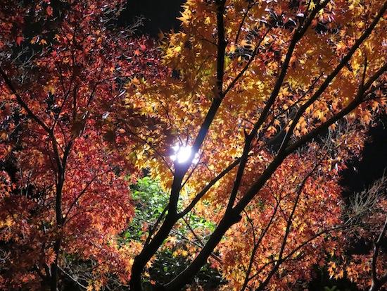 banshu_5296.JPG
